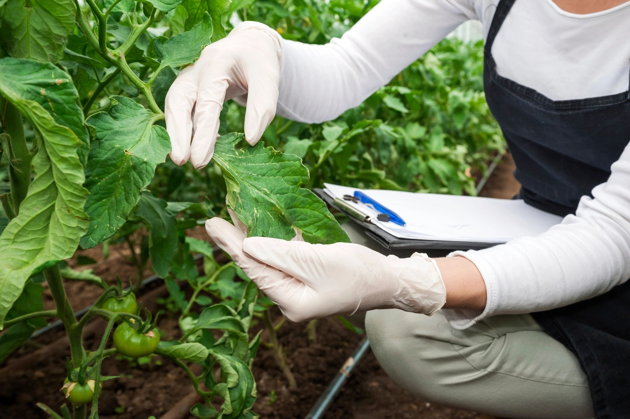 Medical Marijuana Card Doctors Plantation Florida